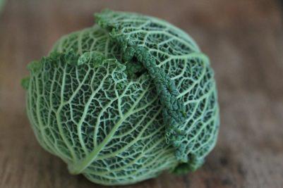 Porchini and lentil cabbage dumplings